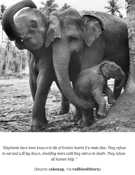 ElephantsMourn